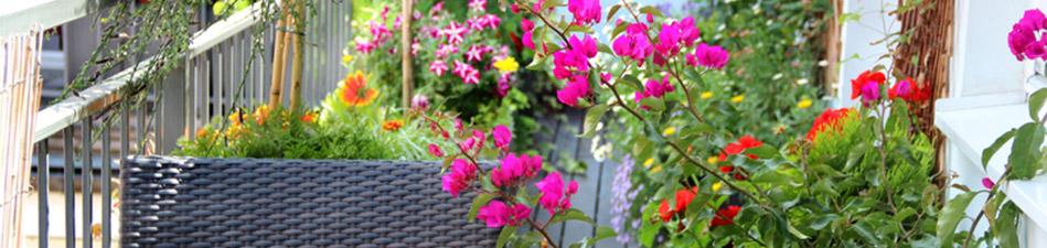floristik_blumenfachgeschaeft_fuerth_blumenstraeusse_schnittblumen_06