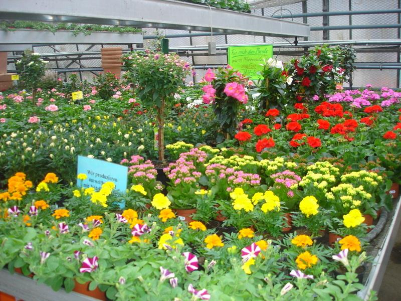 Garten pflanzen garten pflanzen gartenabgrenzung mit for Pflanzen japangarten